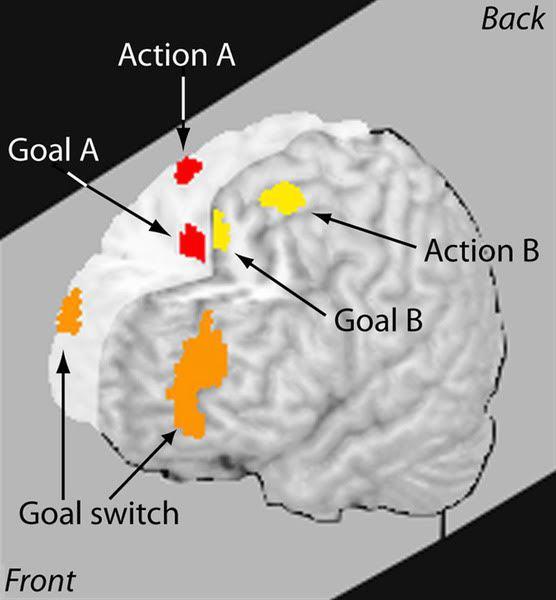 Мифы о многозадачности, или Как наш мозг на неё реагирует - 2